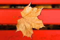 Brown Fallen Maple Leaf on Red Bench Royalty Free Stock Photos