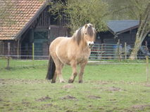 Brown farm horse in a meadow Stock Image