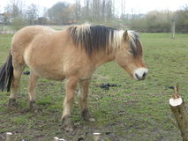 Brown farm horse in the meadow Stock Image