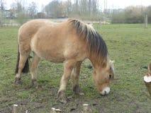 Brown farm horse in a meadow Stock Photos