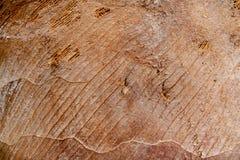 Brown-Faser-Baum-Hintergrund lizenzfreies stockbild