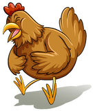Brown fat hen Royalty Free Stock Photo
