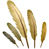 Brown feather Royalty Free Stock Images