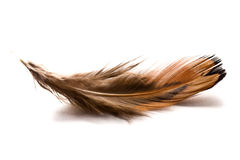 Brown feather. The brown feather on white background Stock Image