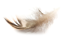 Brown feather Stock Images
