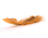 Brown feather Royalty Free Stock Photos