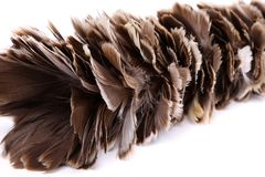 Brown feather duster Stock Photo