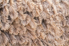 Brown feather ostrich Stock Photos