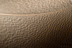 Brown Feather Stock Photography