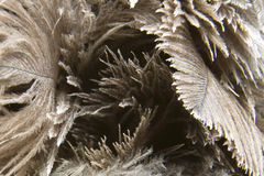 Brown Feather Texture Stock Photo