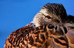 Brown Feathered Bird in Macro Shot Stock Photo