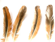 Brown feathers royalty free stock images