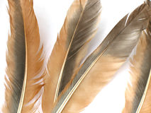 Brown feathers Royalty Free Stock Photo