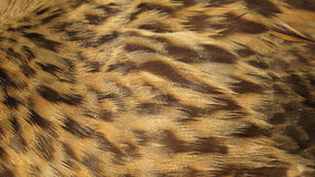 Brown Feathers Background Stock Photos