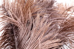 Brown feathers Stock Images