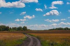 Brown-Feld und grünen weit weg Wald, blauen Himmel am Sommertag lizenzfreie stockbilder