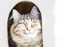 brown female cat in the scratching post Royalty Free Stock Photography