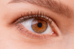Brown female eye wearing contact lenses. Close up view of brown female eye wearing contact lenses. Good vision, vision correction or observation concept royalty free stock images