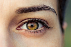 Brown female eye Royalty Free Stock Images