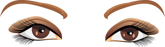 Brown female eyes. Beautiful brown female eyes. Illustration Royalty Free Stock Images