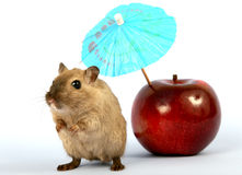 Brown female rodent on summer holiday with umbrella royalty free stock image