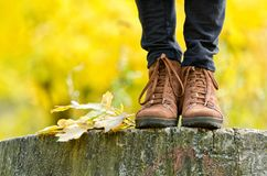 Brown female shoes on a stump, wanting foliage. Autumn concept.  Royalty Free Stock Photography