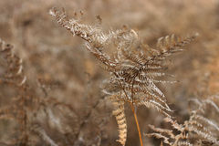 Brown fern. A lightly brown fern against a background of the same color. Autumn Stock Photos