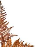 Brown fern corner Stock Photo
