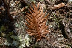 Brown fern leaf lying on the ground. stock photography