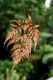 Brown fern leaves Royalty Free Stock Image