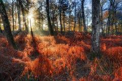Brown ferns in autumn Stock Photo