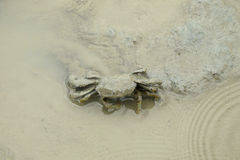 A Brown Fiddler Crab. A fiddler crab camouflaging itself with the mud during low tide Royalty Free Stock Photos
