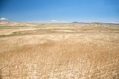 Brown field at navarra Stock Photography