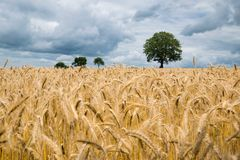 Brown Field Photo Royalty Free Stock Photos