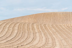 Brown field with rows Royalty Free Stock Photo