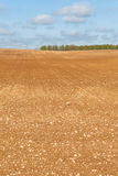 Brown field. Stock Image