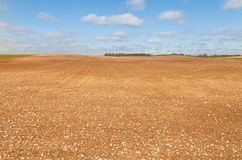 Brown field. Stock Photography