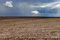 Brown field. Stock Images