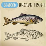 Brown or finnock trout sketch. Fish and seafood Stock Images