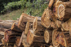 Firewood stacked in a pile Stock Photos
