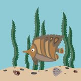 Brown fish Royalty Free Stock Photo