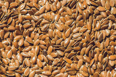 Brown flax seed background. Flax seed is a good source of omega-3 fatty acids, can aid in digestion, and is used to make linseed. Oil. The plants are used to royalty free stock image
