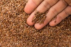 Free Brown Flax Seed. Person With Grains In Hand. Macro. Whole Food. Stock Photos - 109691993