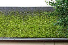 Brown Flexible Tile On The Roof Of The House, Beautifully Overgrown With Green Moss. Soft Roof, Roof Tiles. Flexible Shingles. Roo Stock Image