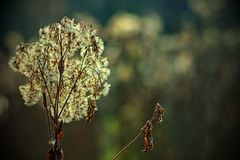 Autumn nature with flowering flower royalty free stock images