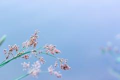 Brown flower Stock Photo
