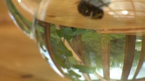 Brown Flower Tea Ball Floating in Teapot. Steady, extreme close up shot of a brown flower tea ball floating in a glass teapot stock footage