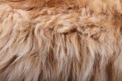 Fluffy animal fur texture Royalty Free Stock Photos