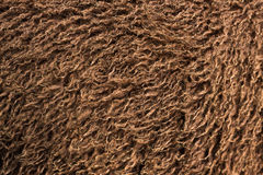 Brown Fluffy Sheep Wool Background Stock Image