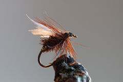 Brown fly fishing bait. Macro shot of a home made dry fly fishing bait used for trout fishing Royalty Free Stock Photo
